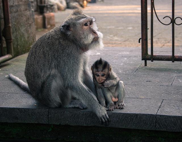 La foresta delle scimmie