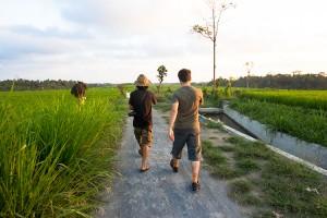 Campi di riso al tramonto